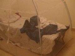 Siatka przeciw komarom przenoszącym malarię